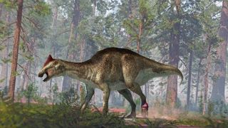 Signs of damage in the hadrosaur's fossilized tail and foot bones revealed that it had been gravely injured in life.