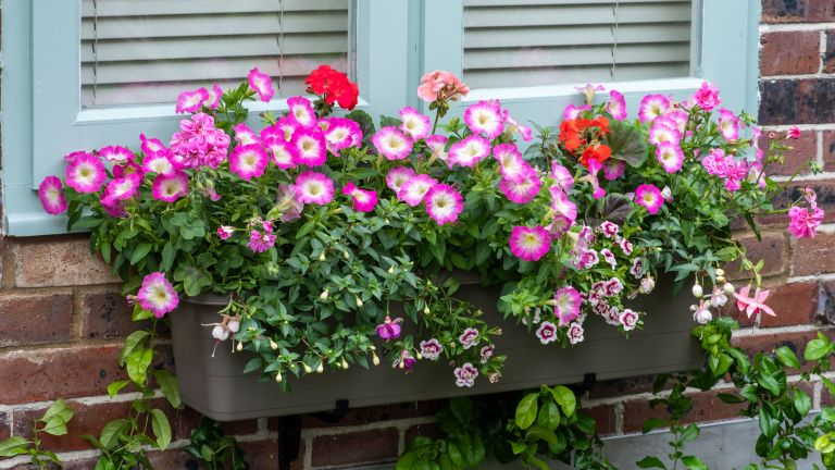 a window box with flowers and plants on a windowsill with blue shutters - future