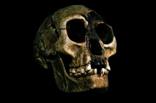 Homo floresiensis, whose skull is shown here, stood at about 3 foot, 6 inches tall and had tiny brains and relatively big feet.