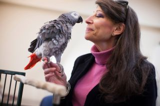 Griffin the parrot with his bird-mom, psychologist Irene Pepperberg.