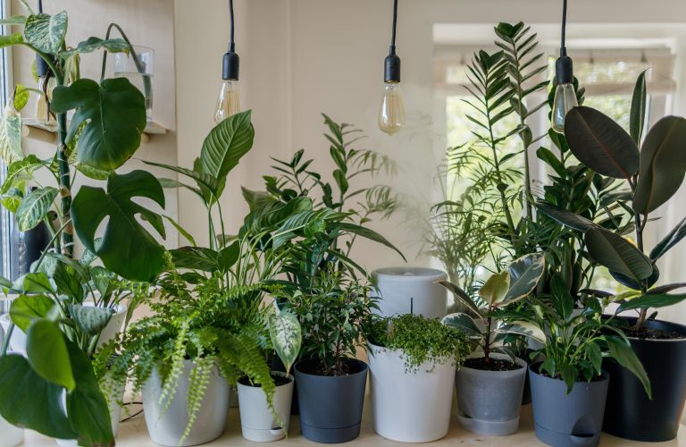Monty Don's House plant watering tip
