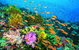 Blue Planet 2 episode three David Attenborough wonder of coral reefs