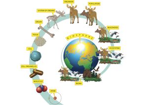Biological hierarchy, what is biology