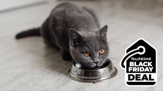 Five best Black Friday cat food deals