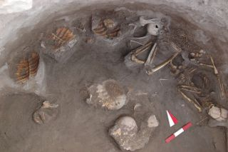 Turtle Skeletons in Ancient Grave