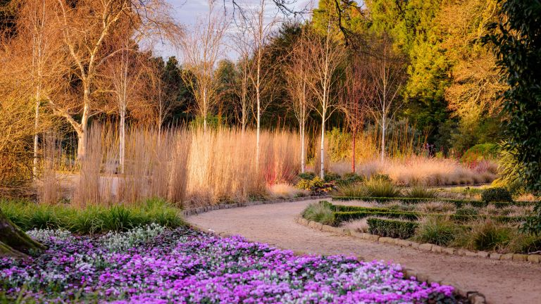 Winter garden ideas: cyclamen and winter trees