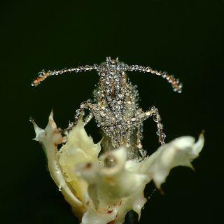 Miroslaw Swietek insect photography