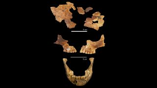 The ancient child's skull and jaw are fragmented. The diagonal lines show where ochre pigment was found.
