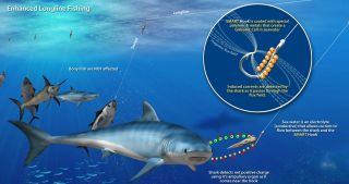 The new SMART Hook reduces accidental shark captures by commercial fisheries.