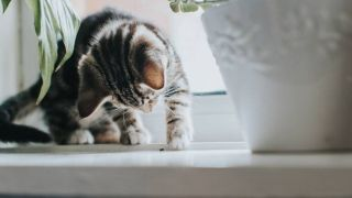 how to entertain indoor cats