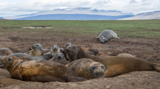 NASA's New Climate Science Recruits Are Elephant Seals with Fancy Hats