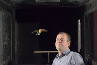 David Lentink of Stanford University stands next to a bird inside the test section of the wind tunnel.