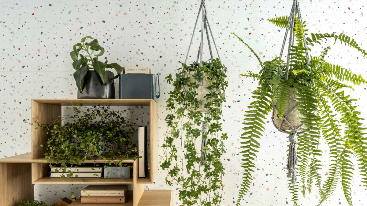 The complete guide to houseplant care