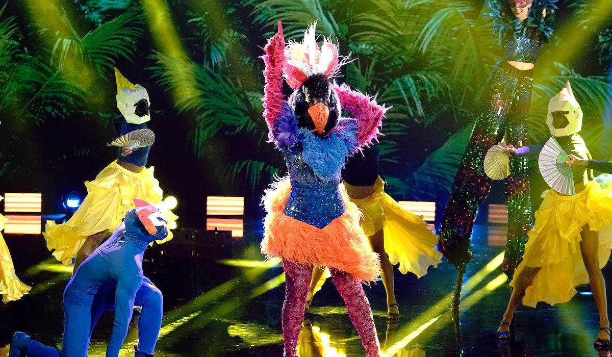 the masked dancer exotic bird dancing