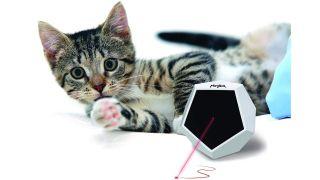 best automatic laser cat toy
