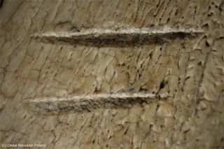 ancient cut marks on a 3.4-million-year-old animal bone