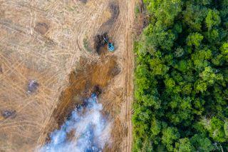 Deforestation, among other human activities, is threatening species' habitats.