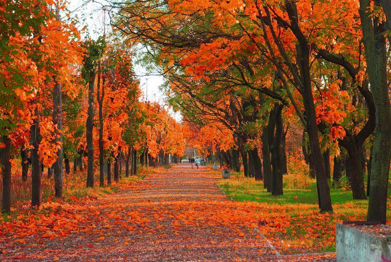 autumn season - photo #35