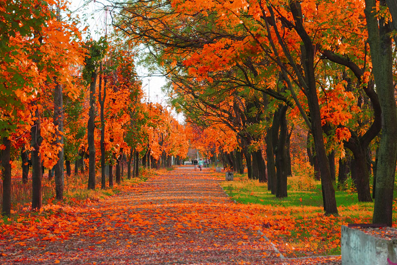 Autumn: The Cooling-Off Season | Live Science