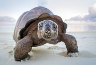 Best BBC Documentaries: A Perfect Planet Giant Tortoise
