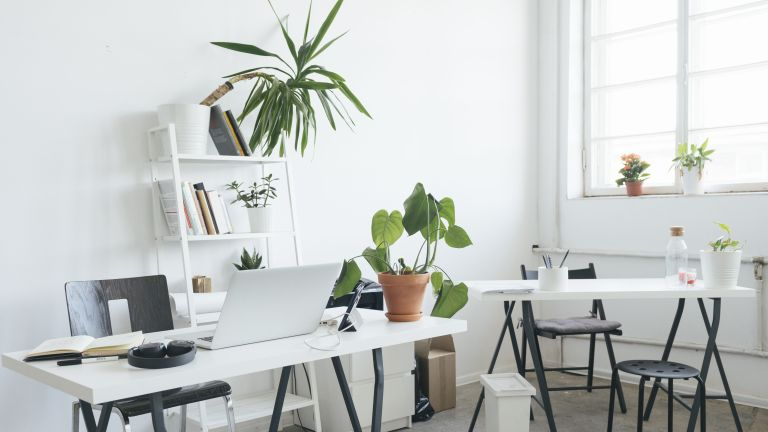 plants for an office desk