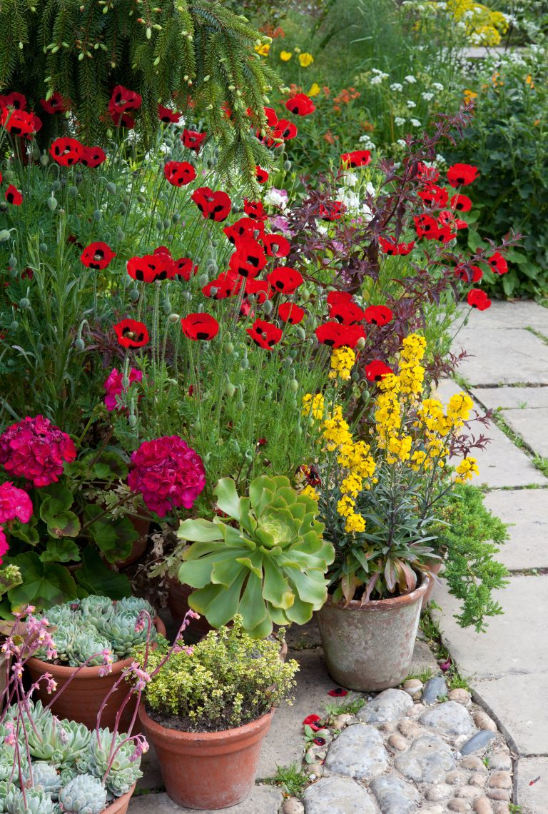 Save the bees with a wildlife garden