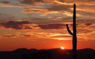 Saguaro National Park national park service