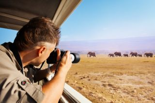A photographer captures elephants on safari