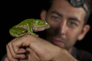 Giant leaf frogs are among the 50 reptiles and amphibian species found in the park.