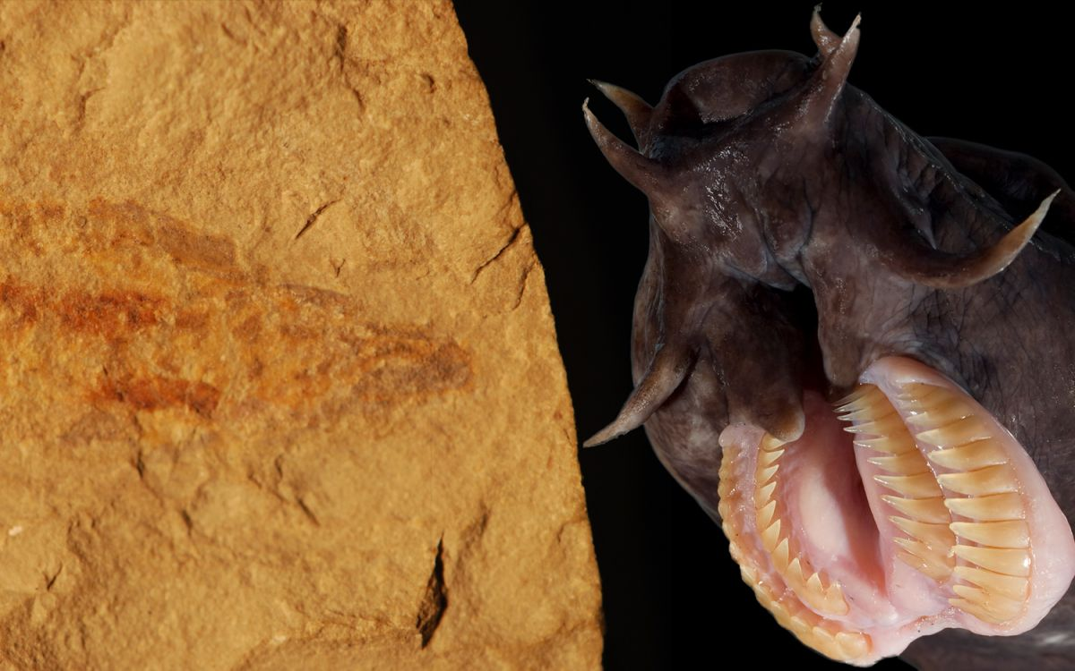 100-Million-Year-Old Hagfish Complete with Slime Kit Discovered