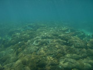 colder water, coral reefs discovery