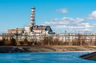 chernobyl, Chernobyl disaster, chernobyl catastrophe, plants decay chernobyl, decomposition, leaf litter