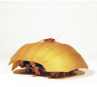 Robot Cockroach