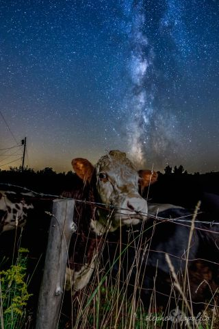 Milky Way and New Hampshire Cows