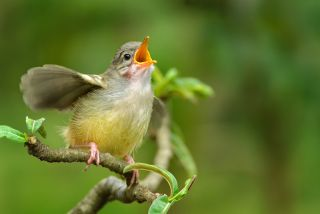 Why Do Birds Sing the Same Song Over and Over? | Live Science