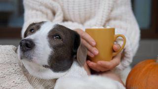 Pumpkin spice latte for dogs