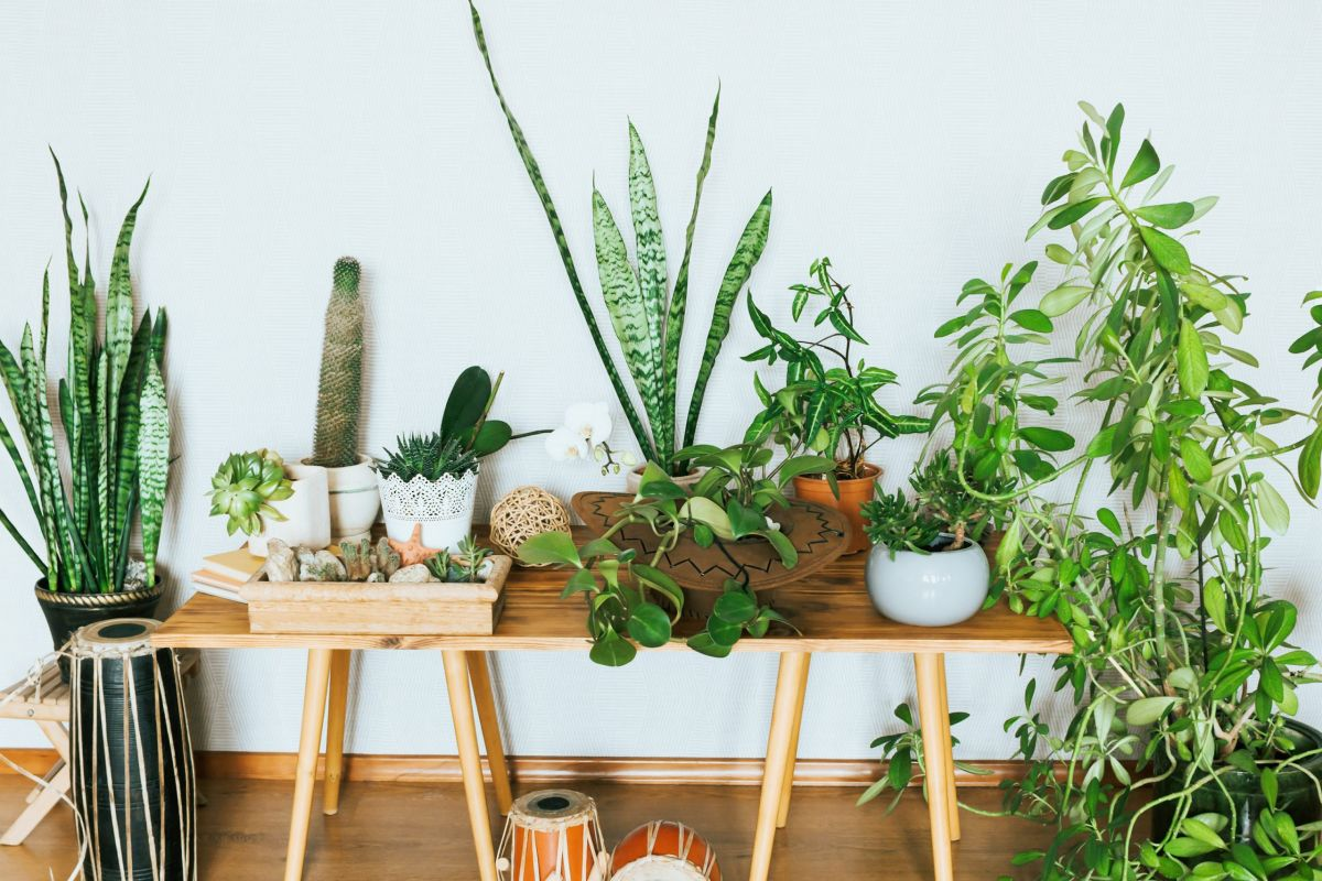 The house plants that will transform your living spaces and boost your mood