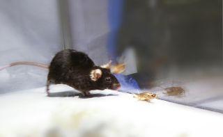 zombie-mice-hunt