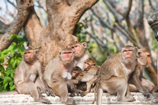 A group of monkeys hang out on a log