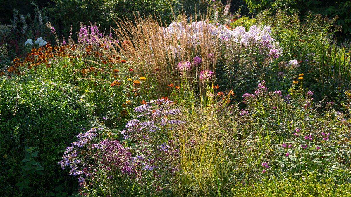 Garden expert Alan Titchmarsh shares clever planting technique for disguising fences and wires in the garden