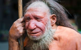 Neanderthals' Big Noses Get an Airy Explanation | Live Science
