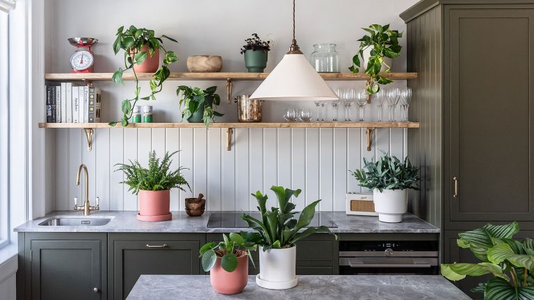 kitchen filled with houseplants, chinese money plants and pothos