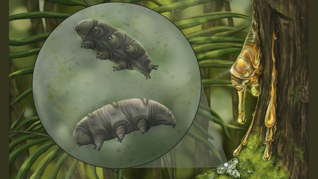 Tardigrade trapped in amber is a never-before-seen species