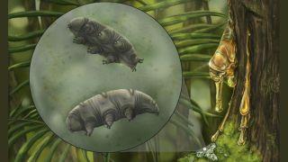 An artistic reconstruction of the tardigrade species Paradoryphoribius chronocaribbeus in moss