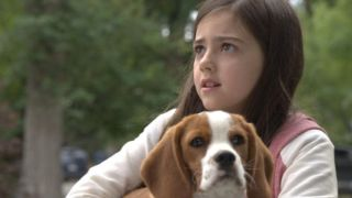Movies for dog lovers: Image of a scene from A Dog's Journey