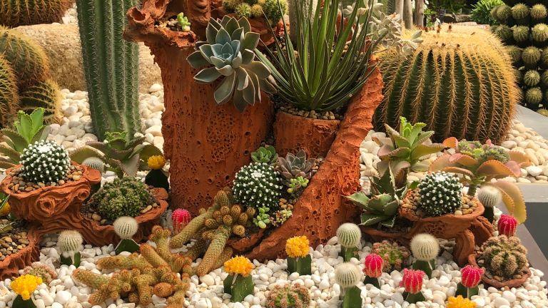cactus garden ideas in gravel