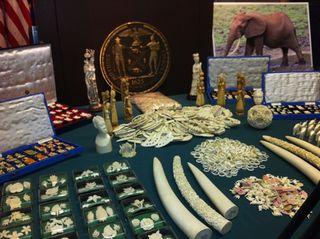 ivory bust, poaching, elephants
