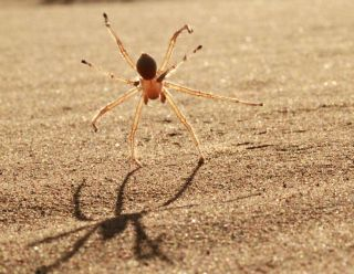 An image of a spider