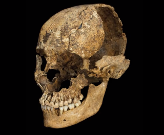 damaged skull from cannibalization