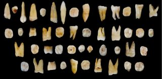 Scientists discovered 47 teeth from modern humans in Fuyan Cave in southern China's Hunan province that date back at least 80,000 years.